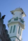 Mosque_crow_for_web