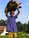 Boy_w_firewood_for_web