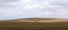 Herd_on_vista