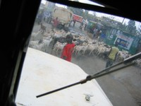 Goat_roadblock_for_web